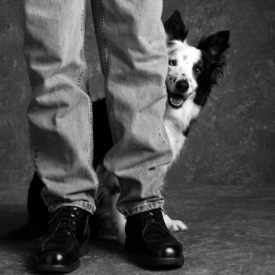 Border collie peering out from behind its owner's legs
